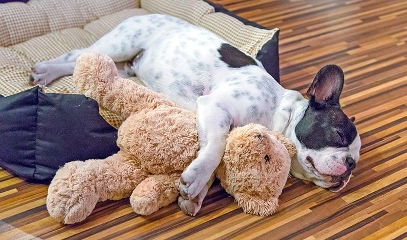 puppy bed 183692529 800x472
