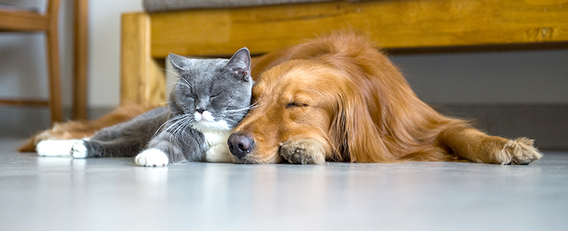 Dog and cat inside the home laying on the floor sleeping.