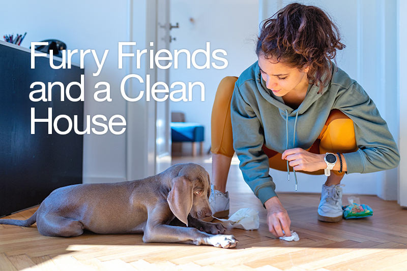 Cleaning floor with pet safe cleaner.